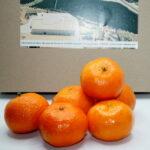 Compra Online Clementines de les Terres de l'Ebre